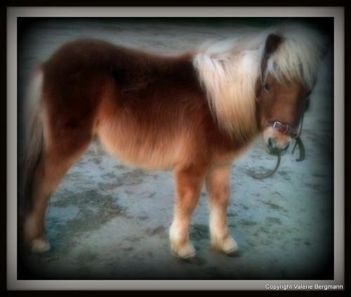 Krista, chien, Gemini, cheval, Bobine, poney