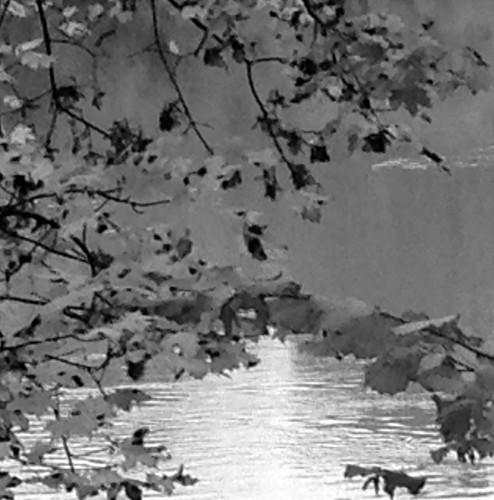photos, art, noir et blanc, nature, paysage, dessin, lac, feuilles, reflets, formes