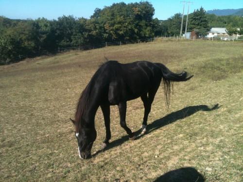 cheval, pré, sécheresse, octobre