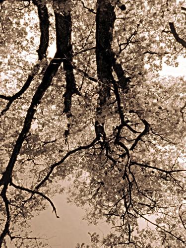 photo,art,reflets,branches,bois,feuillage,arbres,ciel,terre,eau,drôme