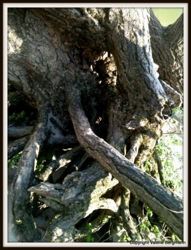 photo, bois, arbre, Ardèche, pont de l'arc, nature,