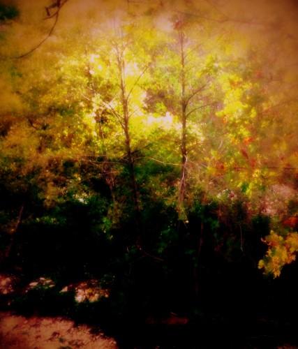 photo, art,numérique,illustration, nature,peinture,  arbre, forêt, couleur