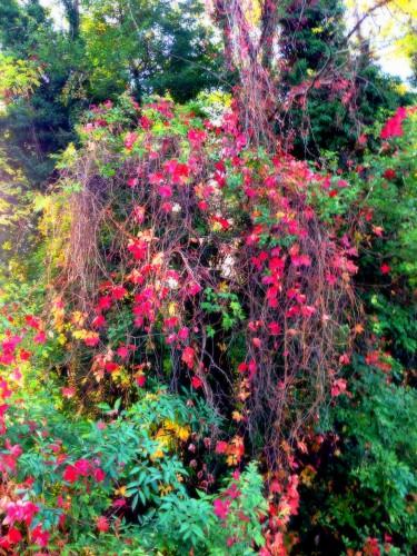 Photo, feuilles, nature, automne, couleurs, cascade, paysage, nature