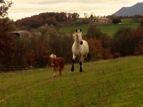 photos,chevaux,hippos,gemini,bobine,amour,drôme,nature,animaux,campagne,pré,automne