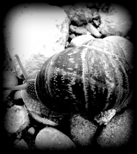 photos, noir et blanc, escargot, moineau,