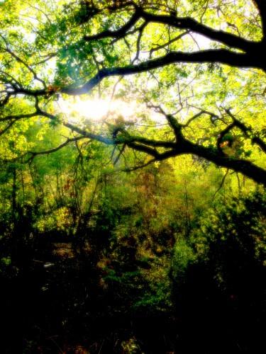 photo, Drôme, Bourdeaux, paysage, nature, terre, faune, flore, couleurs, lumière