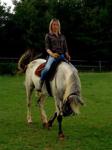 photo, cheval, gemini, campagne, drôme, pré, champs, couleurs, exposition