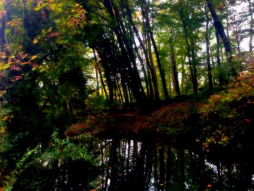 photos,art,parc,paysage, lac,relief,nature, couleurs, lumières,estampe,canard,branchages,automne,tourisme,drôme,verdure,romans