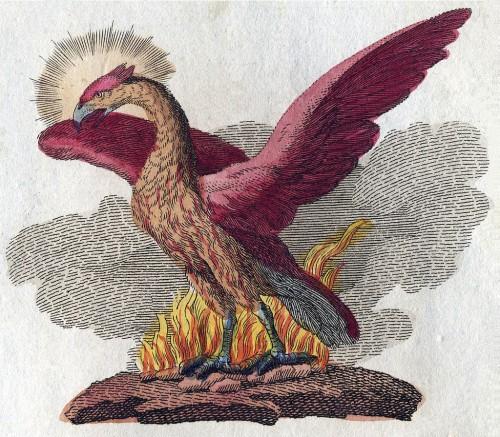 art, gravure, Phoenix, aigle, oiseau, vie, soleil
