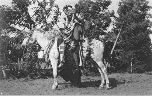 photo, chevaux, appaloosa,noir et blanc, indiens, nez percés,ouest, Amérique, Palouse,