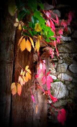 photo, jardin, feuilles, couleurs, plantes, vigne rouge, les chanaux, drôme, campagne