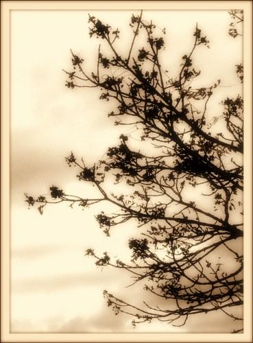 photographie, art, noir et blanc, dessin, nuances,calligraphie,estampe, branches, nature, paysage, drôme,les chanaux