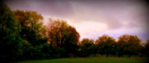 photo, art, paysage, peinture, bosquet, Drôme, nature, arbres, nuances, luminosité, land art