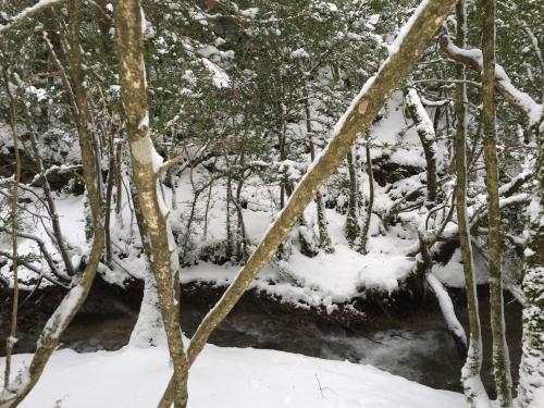 Photos,Valerie bergmann, neige, vercors, Drôme, joies, flocons, nature