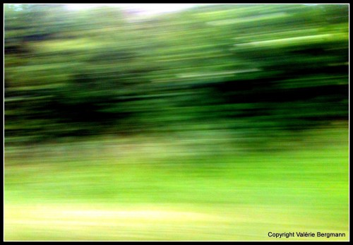 photo, paysage, nature, champ, vert