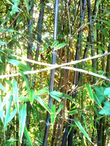 poésie,nature,photo,mare,bambous,verdure,soleil,reflets