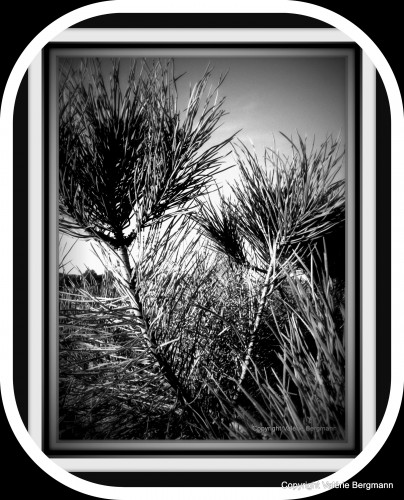 photo,vercors,paysage,lumières,montagne