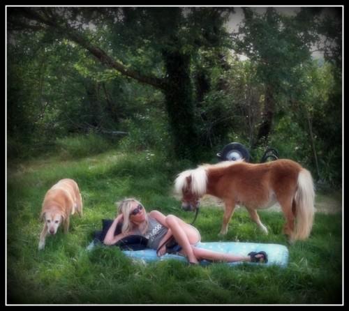 photo,animaux,bobine,kristal,poney,chien,nature,les chanaux,drôme