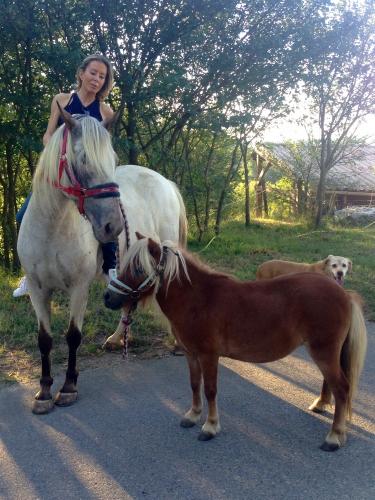 photoss, chevaux, chien, cristal, gemini, bobine, valerie bergmann, soins, drôme
