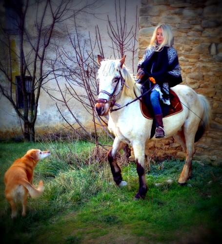photos, cheval, Gemini, ballade, campagne, décor, kristal, chien, drôme