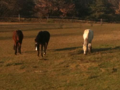 photo, animaux, amours, chevaux, poney, bobine, gemini, hipos, cache-cache