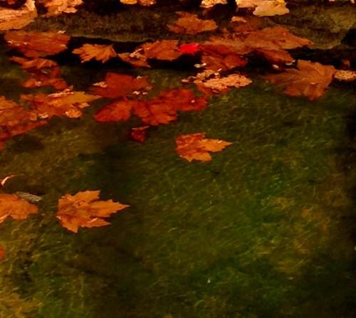 photo, automne, feuilles, couleurs, paysage, teintes, pourpre, jaune, éthylène, caroténoïdes, chlorophylle, mélange,