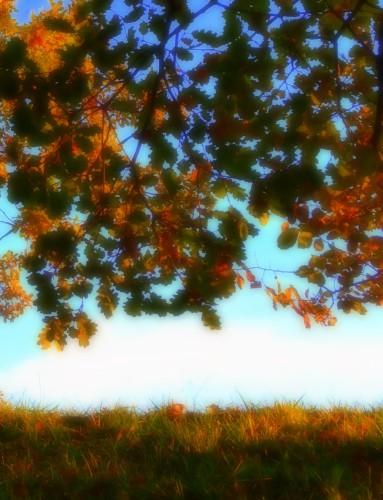 photo,art,noir et blanc,reflets, couleurs, luminosité,branches,bois,feuillage,arbres,ciel,terre,eau,drôme
