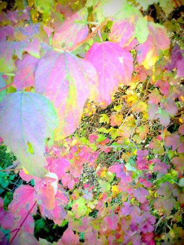 photo, art, numérique, nature, feuillages, feuilles, couleurs, jongler, perspective, automne