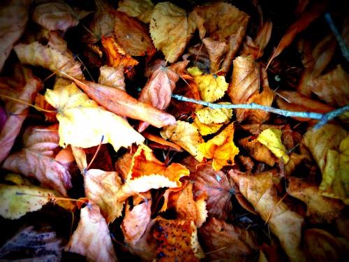 photo,vigne vierge,feuilles,couleurs,bois,pierres,plantes,vigne rouge,les chanaux,drôme,campagne